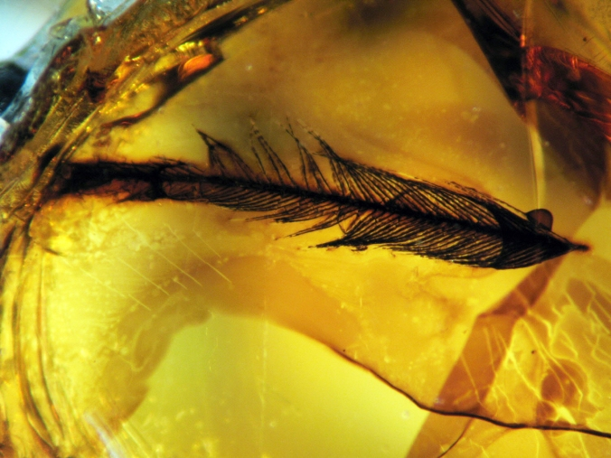 Bird Feather Fragment in Amber