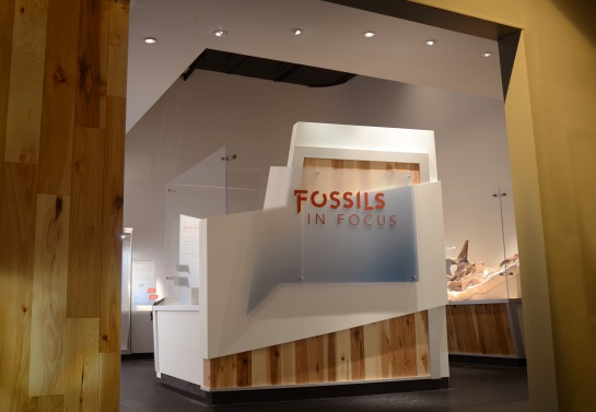 Fossils in Focus Entrance
