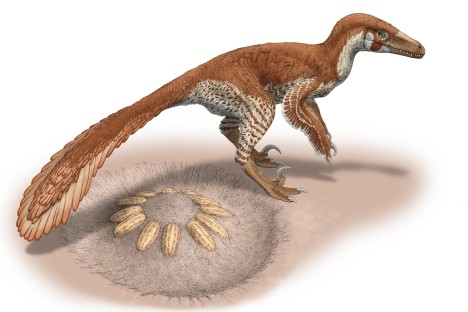 Montanoolithus_04_201409181406_1800