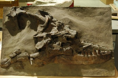 1884 Albertosaurus find-cast