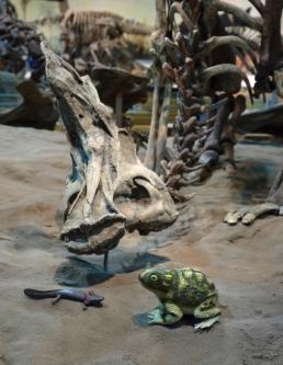 salamander-frog-lambeo_4704-2