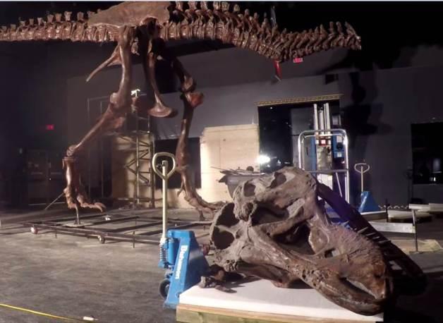 T. rex dismantle