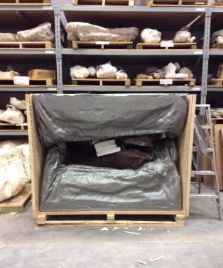 The skull of the T. rex in its packing crate