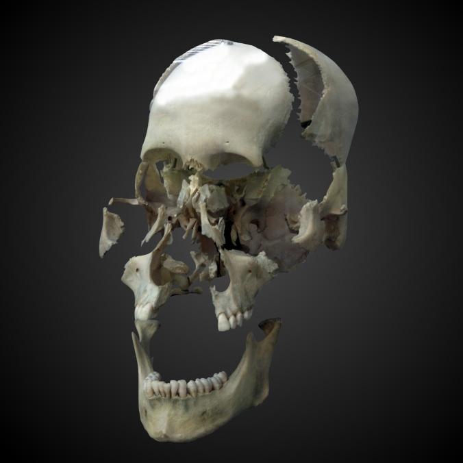 8-HumanSkull-WP