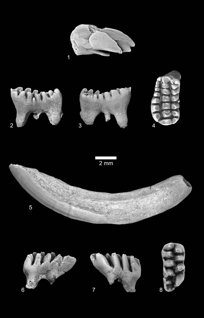 The teeth of Catopsalis kakwa.]