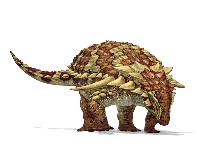 An illustration of a nodosaur. Note the absence of a tail club and the large shoulder spikes. Illustration by Julius Csotonyi.