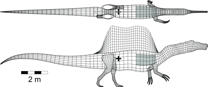 A digital model of the centre of mass of Spinosaurus, illustrated by the black plus symbol located at the hind legs. Spinosaurus has a centre of mass similar to other theropods, like Tyrannosaurus rex shown below.