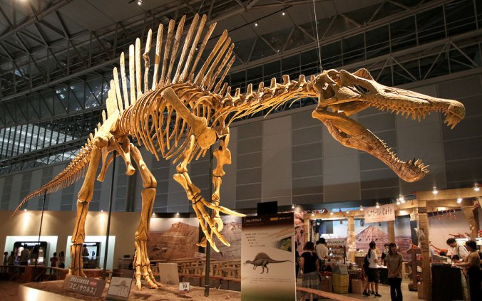 Spinosaurus on display at Makuhari Messe in Chiba, Japan. Image copyright free under creative commons.