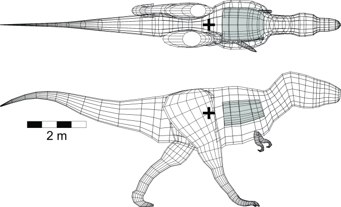 digital model of the centre of mass of Spinosaurus, illustrated by the black plus symbol located at the hind legs.