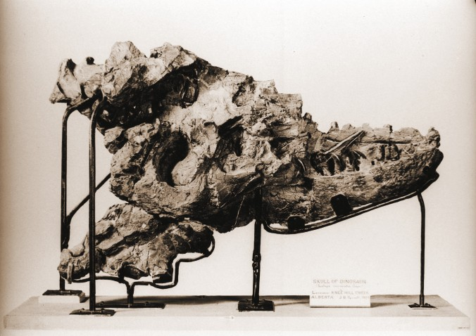 The skull on display.
