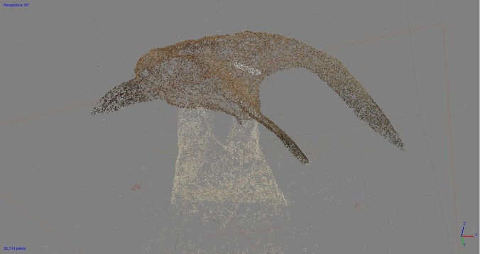 "The right pre-maxilla rendered as a ""point cloud""."