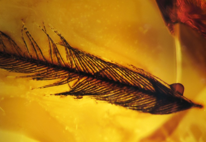 Bird feather fragment in amber. 80 million years old. Late Cretaceous, Foremost Formation. Grassy Lake, Alberta.